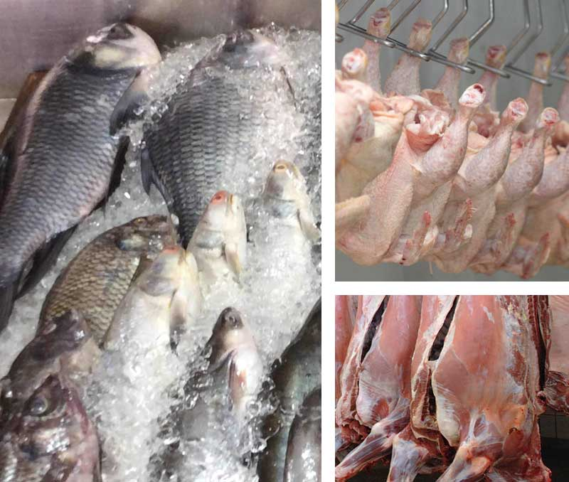 Meat/Fish/Egg processing plants