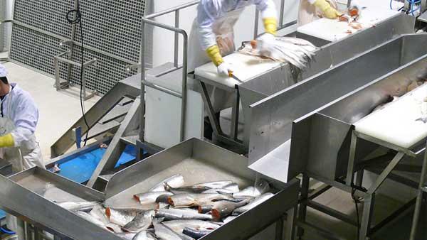 fish_automation
